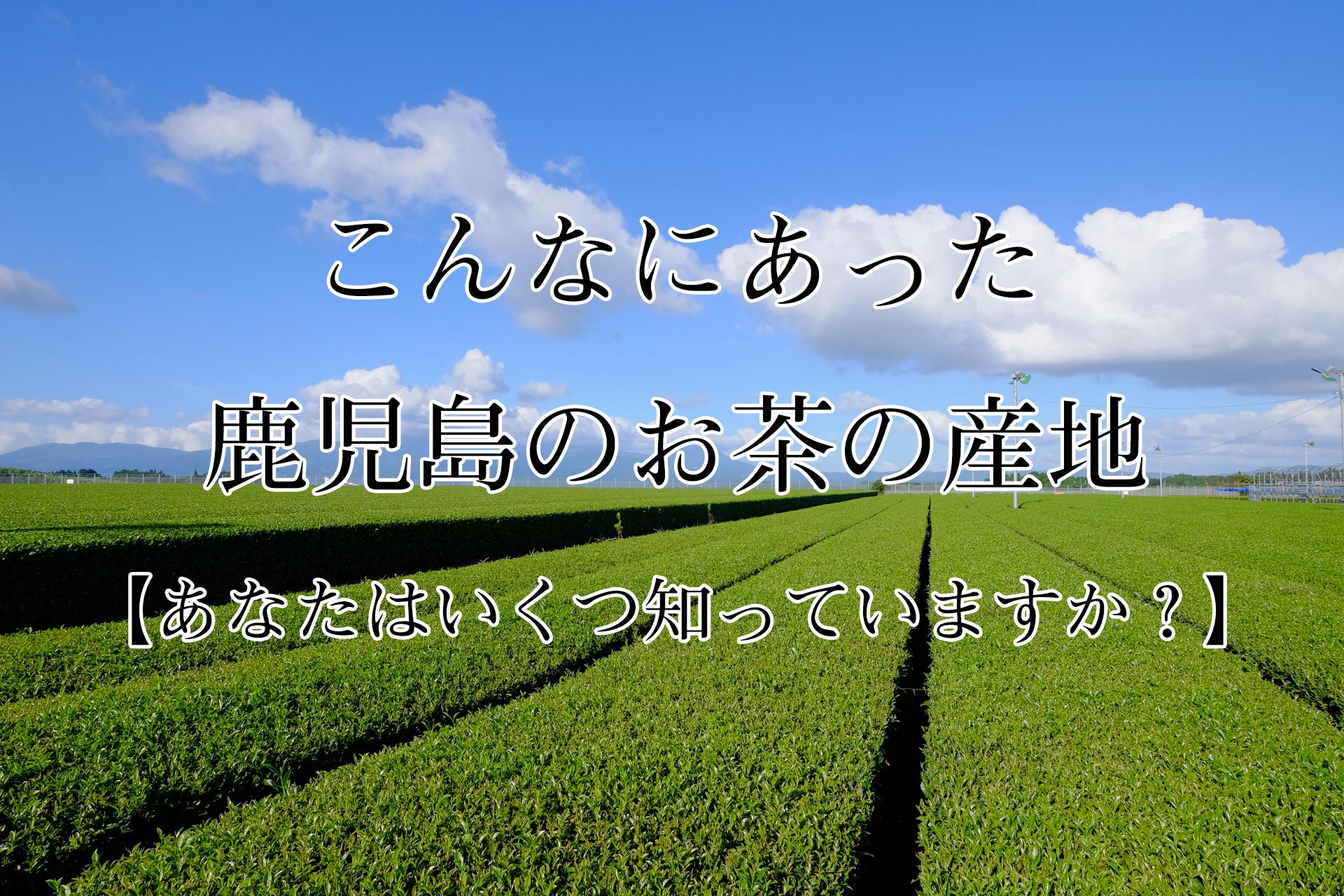 こんなにあった鹿児島のお茶の産地【あなたはいくつ知っていますか?】