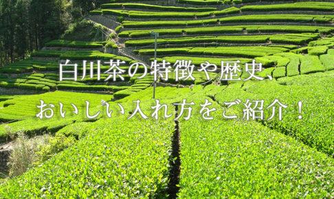 白川茶の特徴や歴史、おいしい入れ方をご紹介!